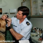Vet checking dog's mouth for canine bad breath problem