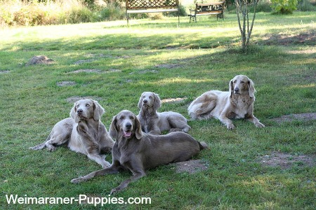 Geriatric dogs lying on the grass